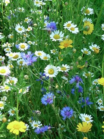 12 plantes essentielles pour avoir un beau jardin toute l 39 ann e en mont r gie qu bec canada. Black Bedroom Furniture Sets. Home Design Ideas